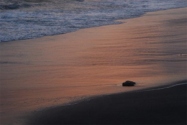 夕陽の絨毯