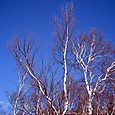 10249img004_a