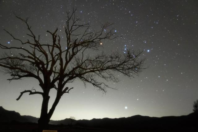 やまなしの木と昇るオリオン